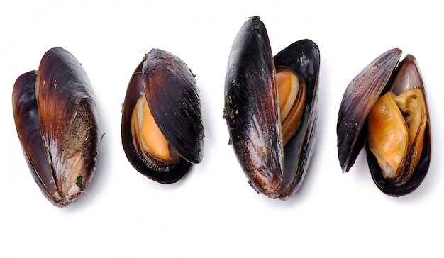 Delicious mussels on white