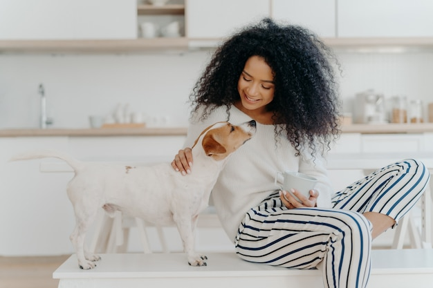 Delighted curly woman with cheerful expression poses with jack russell terrier dog at home, drinks aromatic beverage