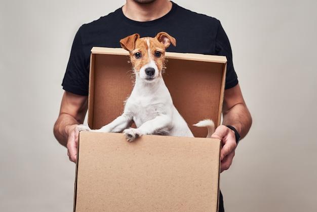 黒い制服を着た配達人は、ジャックラッセル犬を入れた段ボールの宅配ボックスを持ちます。贈り物としてのかわいいペット
