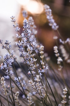 Delphinium blue flower grows in the garden