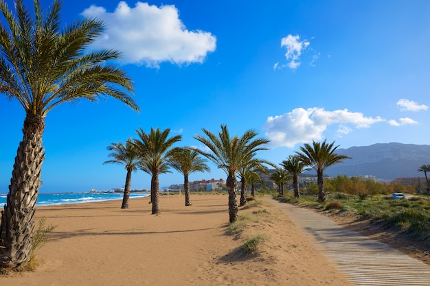 Delic beach las marinas, 야자수 알리 칸테