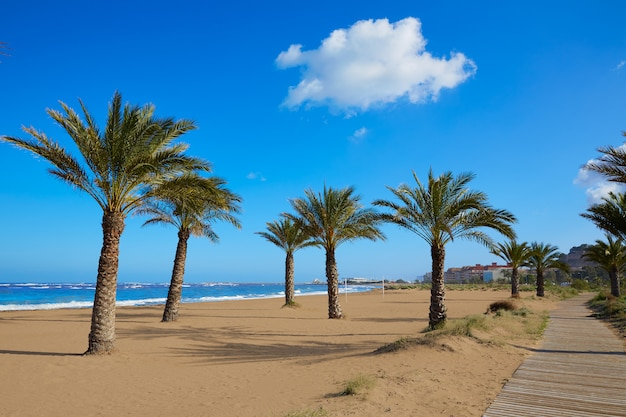 Denia beach las marinas with palm trees alicante