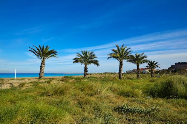스페인의 denia las marinas 해변 야자수
