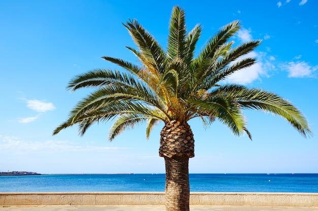 Marineta casiana 해변에서 denia 야자수