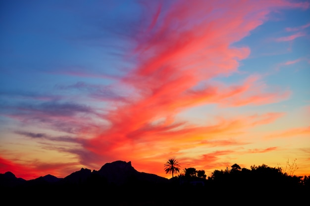 Denia sunset sky with palm trees and mountains