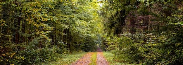 木々が紅葉し、森の真ん中に道が広がる鬱蒼とした秋の森