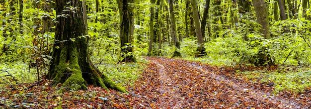 苔むした木々が生い茂る鬱蒼とした秋の森と落ち葉の道