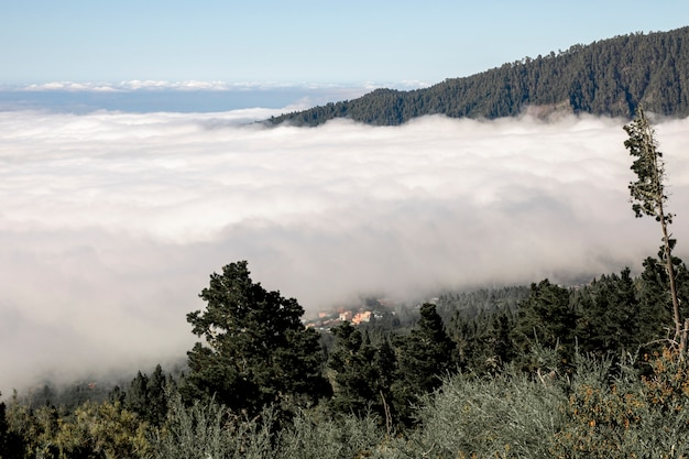 Dense clouds in the mountain forest