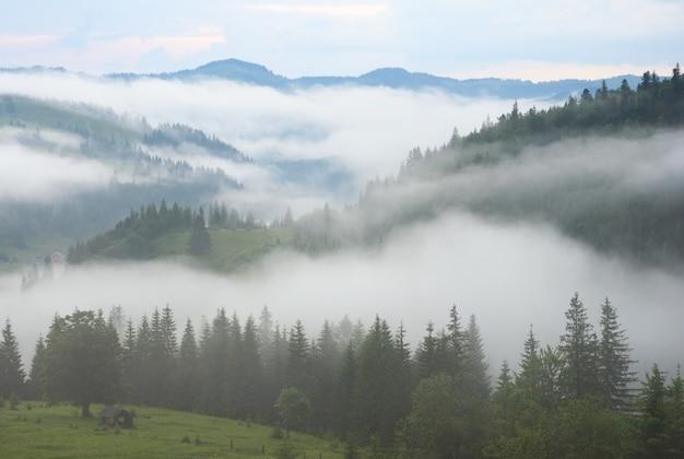 夏山の濃霧。
