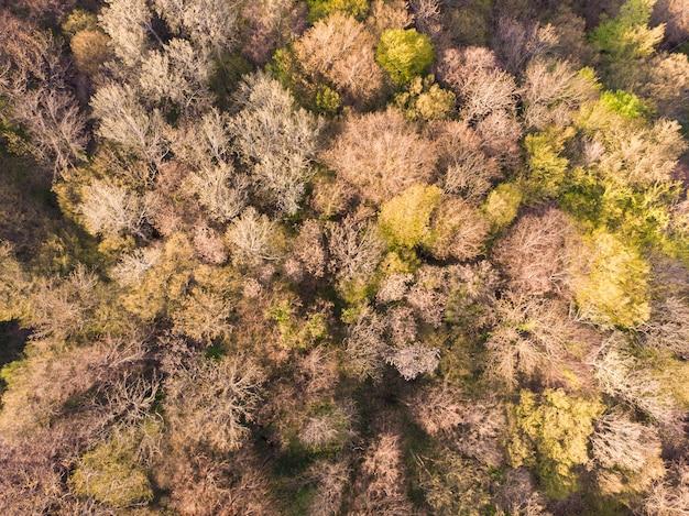 Густой лес с высоты птичьего полета лес с опадающими и желтеющими листьями