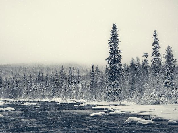 密なトウヒの冬の北極の森。山の冬の森の夕暮れ。カレリア。