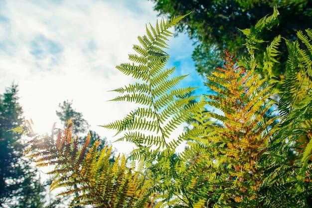 森の中のシダの密な茂み