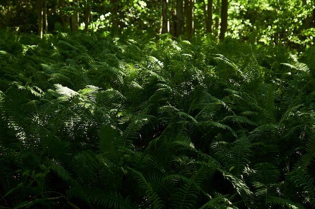 Густые заросли лесных папоротников в тени между стволами деревьев