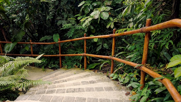 Dense tropical rain forest walkway with concrete stairs and wooden bamboo handrails under green leaves.
