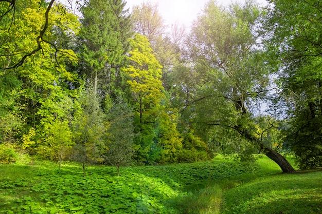 Густая древесная растительность в парке в летний день.