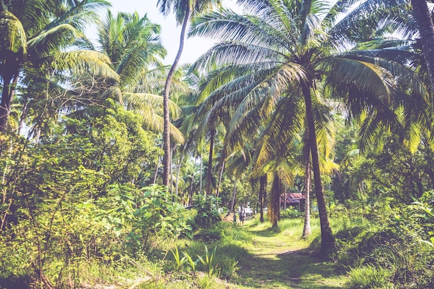 Densely growing trees in a palm grove. green bushes and palm trees on an exotic island in the background.