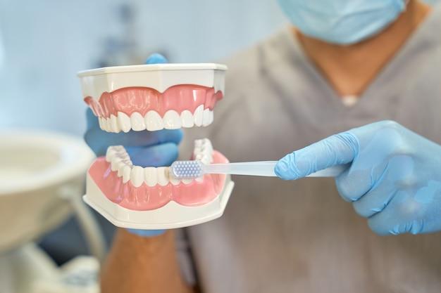 치아 모델에 칫솔질의 규칙을 설명하는 치과 의사