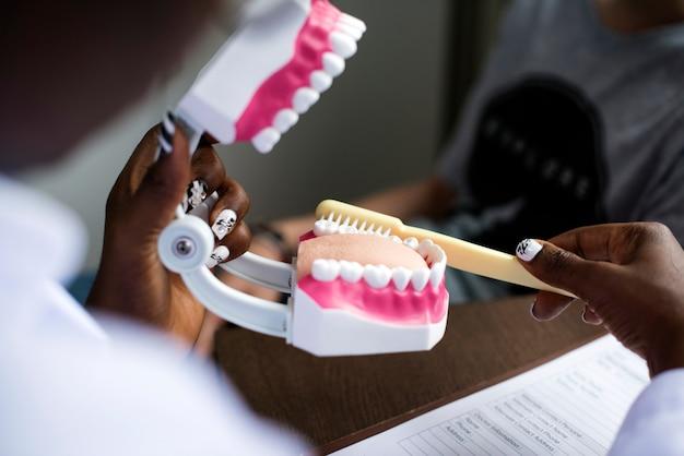 歯科用顎模型