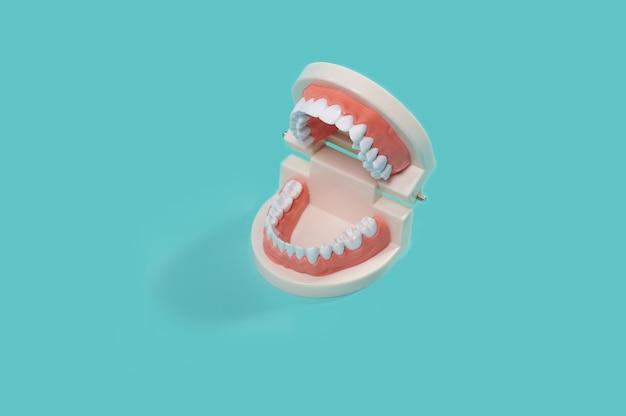 Стоматологическая модель человеческих зубов, челюсть, изолированные на синем фоне. челюсти зубы. стоматология