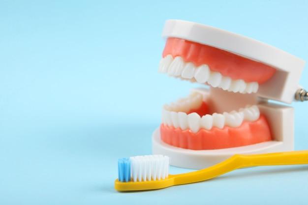 Стоматологическая модель зубов и средств ухода за зубами на цветном фоне