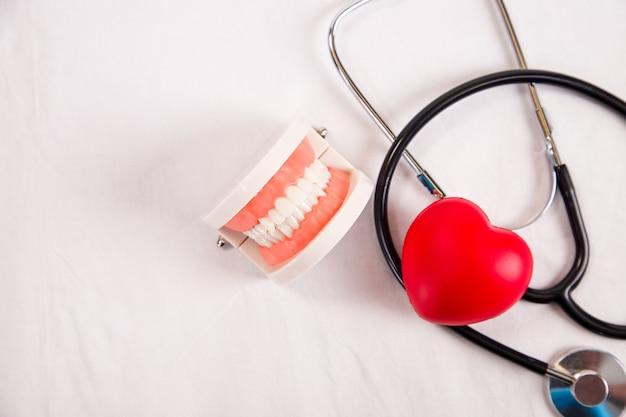 白い背景に、ヘルスケアの概念に分離された歯の歯科用モデル。