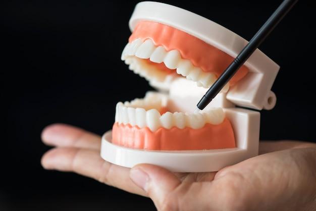 Dentist demonstrate lower molar tooth