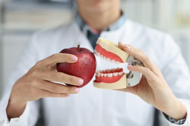 Dentist doctor holds artificial jaw and apple closeup