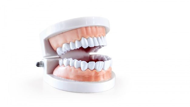 Dentist equipment, dentistry instruments or dental hygienist checkup dentures teeth model isolated