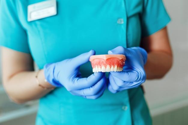 Стоматолог держит модель зубов