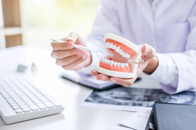 Dentist holding of jaw model of teeth and cleaning dental
