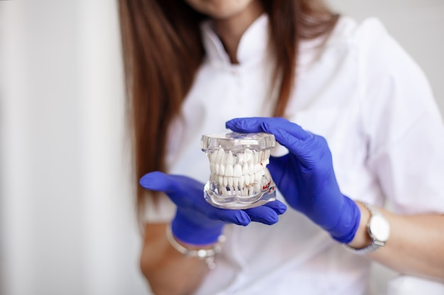 A dentist is holding a sample of jaw teeth in a dental office.