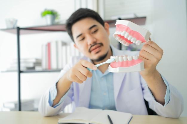 歯科医の男性の手は歯のモデルを保持し、歯ブラシを使用してブラッシングします