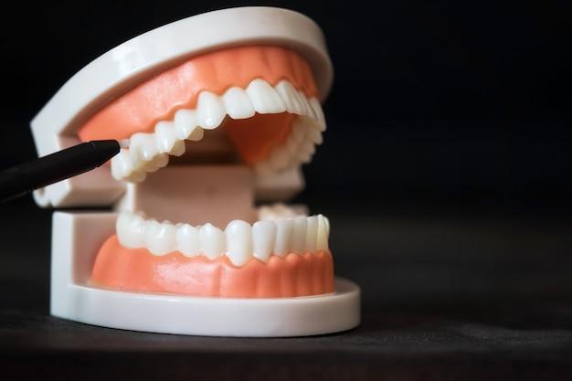 Стоматолог указывает на молярный зуб. стоматологические знания