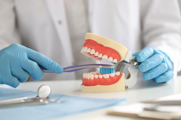 手袋をした歯科医は歯ブラシを持って、顎に歯を正しくきれいにする方法を示します