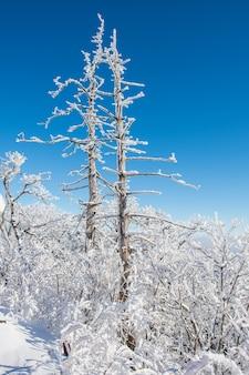冬の德裕山、韓国