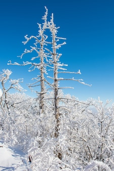 Deogyusan in inverno, corea
