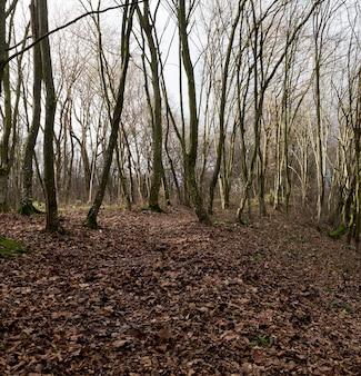 Угнетенный лиственный лес без листьев в осенний сезон, пейзаж