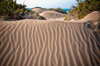 Desert dunes with waves