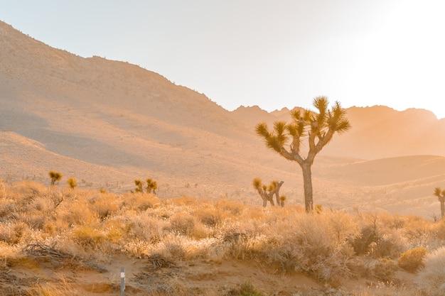 Поле пустыни с деревом джошуа на закате с холмистым ландшафтом