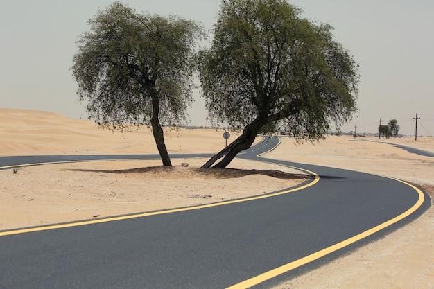 중간에 나무가 있는 사막 갈림길, 이중 길