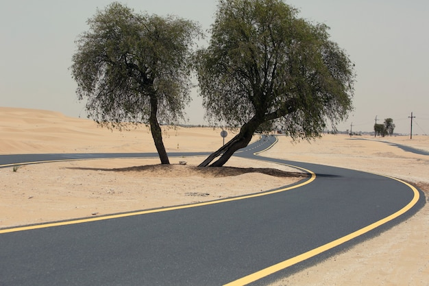 Desert forked road with trees in the middle, double way