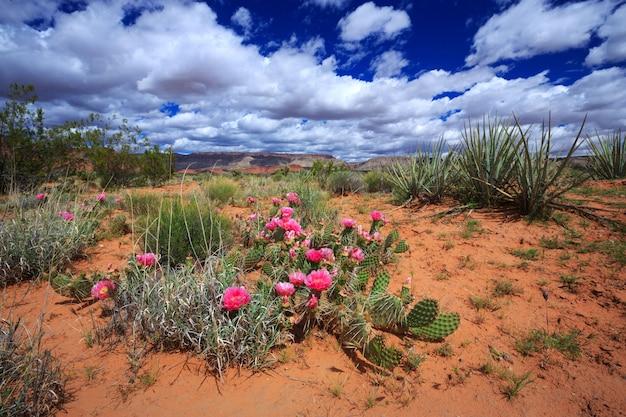ユタ州の砂漠の風景