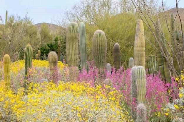 サボテンと春の花の砂漠の風景
