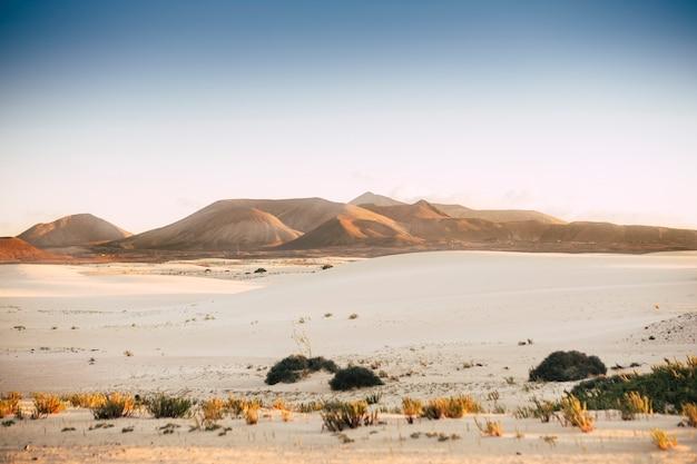 シーンに山がある砂漠の風景
