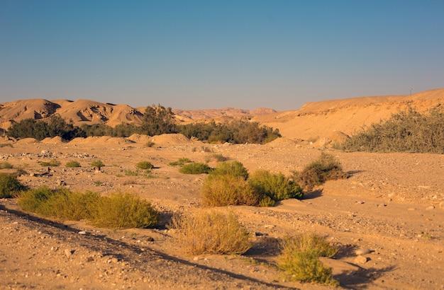 모래 언덕과 식물, 야생 자연이 있는 사막 풍경