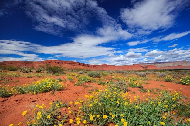 봄 유타 풍경에 사막 금 잔 화 야생화