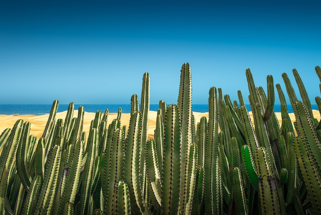 Desert panorama of the dunes with cactus