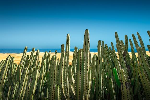 サボテンと砂丘の砂漠のパノラマ