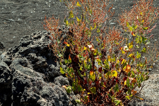 Desert plant growing beside a stone