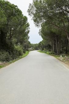 森を抜ける砂漠の道